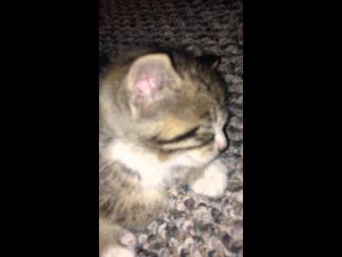 My baby kitten sleeping...