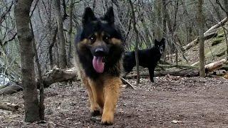 Dogs Roll In Dead Fish Hike (#2)