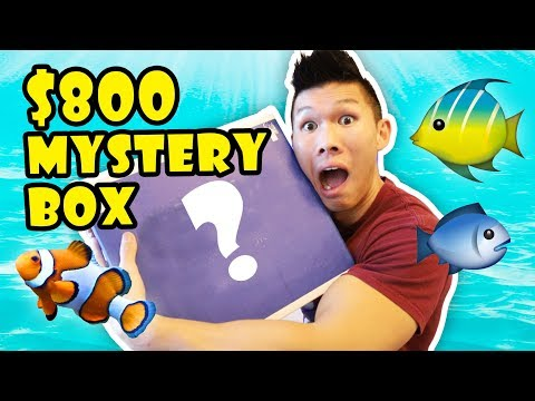 $800 FISHY MYSTERY BOX - Saltwater Aquarium || Life After College: Ep. 581