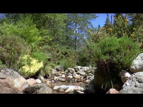 Nature Sounds: Babbling Brook with Soft Chirping Crickets