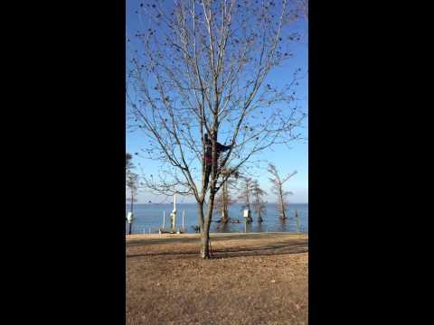 How to Get Pecans off a Pecan Tree