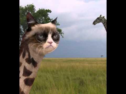 Grumpy Cat giraffe