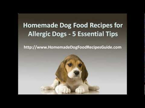 Homemade Dog Food Recipes Allergies