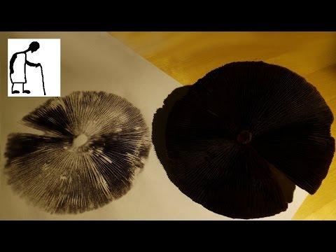 Let's Make a Mushroom Spore Print