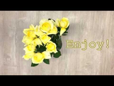 Garden Roses Flower Care