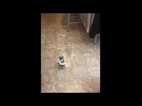A MiP robot feeds the dog