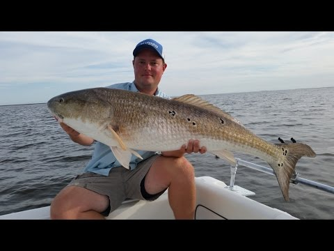 Giant Bull Red Drum Fishing on the Pamlico Sound