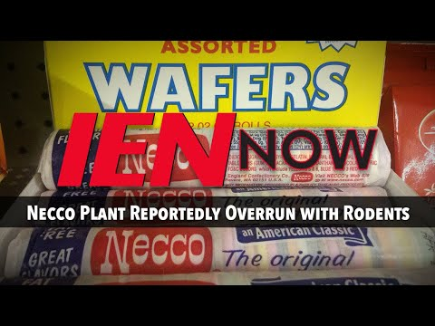 IEN NOW: Necco Plant Reportedly Overrun with Rodents