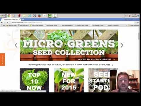 seedsnow.com website review