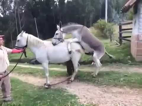 Xxx Mp4 Donkey And Horse Mating 2019 3gp Sex