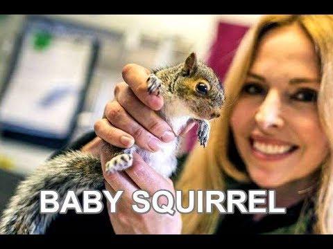 WILD BABY SQUIRREL RESCUE - VERY CUTE