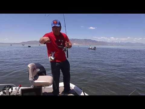 Utah lake white bass fishing 2017