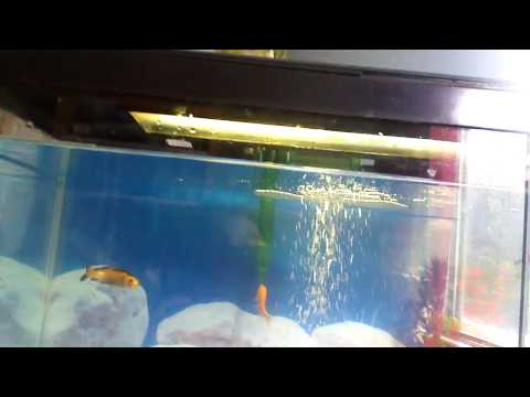 Keeping Goldfish Healthy and Happy. Tips and Tricks