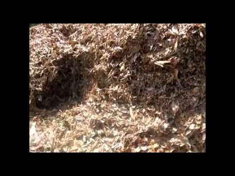 Hot water from mulch  compost water heater compost geothermal decomposition