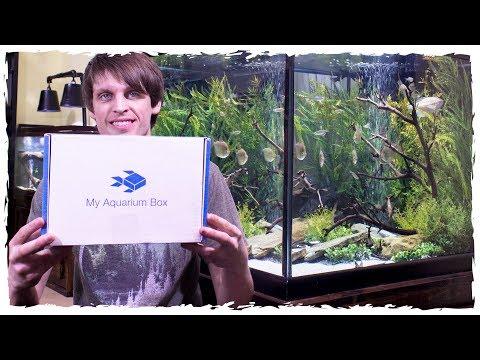 My Aquarium Box Unboxing