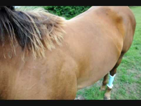 Ringworm on a horse - prt 1 - The first signs