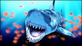 7 Ways To Avoid A Shark Encounter