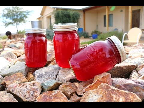 Prickly Pear Jelly - How to make