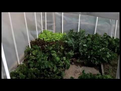A Backyard Greenhouse to Grow Food In Winter