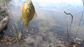 для рыбалки кишинев