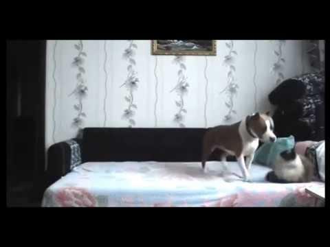 Dog Left Home Alone Breaks