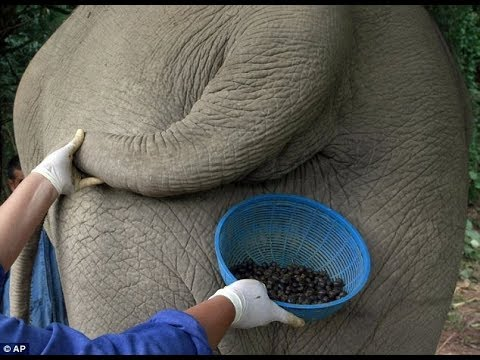 Interesting facts about Coffee!! Most Valuable Coffee from Dung