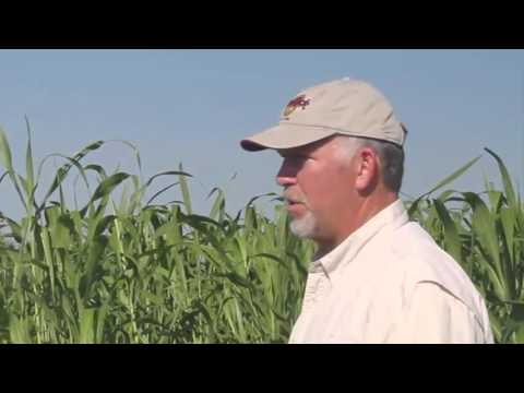 Using Multspecies Cover Crops to Improve Soil Health at Swallow Hill Farm
