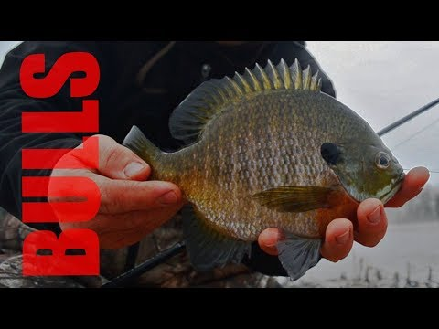 Early Spring Bluegill Fishing [2018]