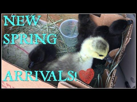 I'm BACK & NEW Spring Arrivals!~