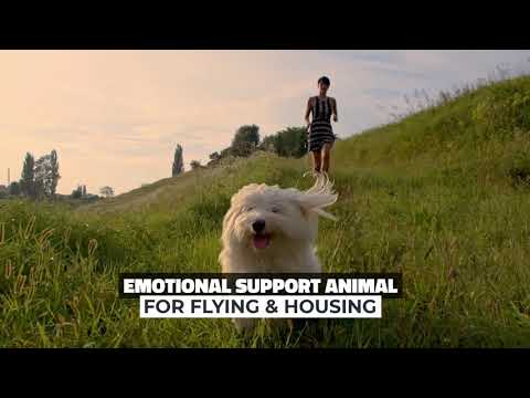 Emotional Support Animal Doctor - Get your ESA letter in 10 minutes