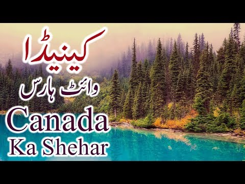 Whitehorse Canadian City History In Urdu Hindi Canada Ka Whitehorse Shehar