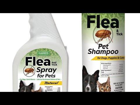Homemade Flea shampoo for dogs/puppies