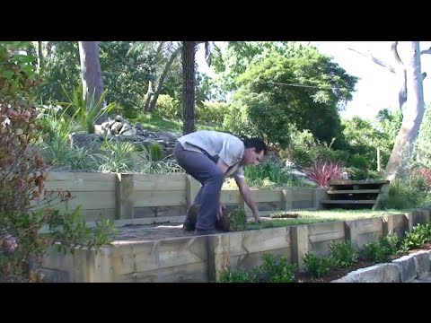 How To Lay Turf To Create A Lush Green Lawn