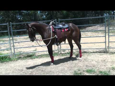 appy mare on left lead