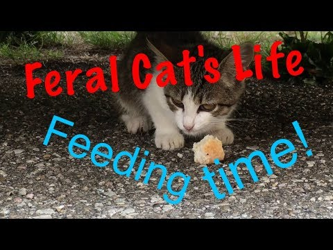 Feral Cat's Life 1 - Feeding Time