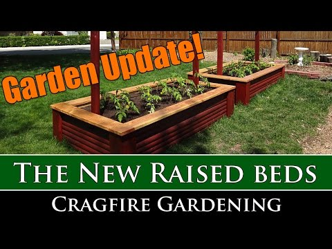 New raised beds and tomatoes for 2016!