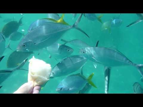 Fish Feeding in Snake Island - Puerto Princesa Palawan