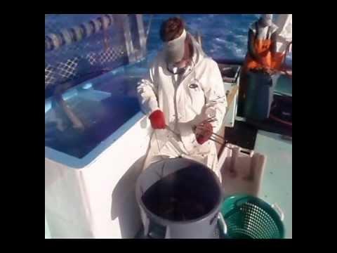 Florida Keys Lobster Boat Fishing