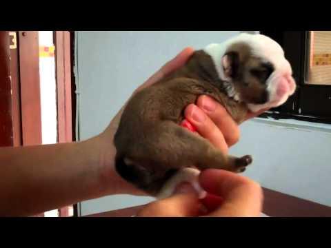 Dog Health: Dog Constipation