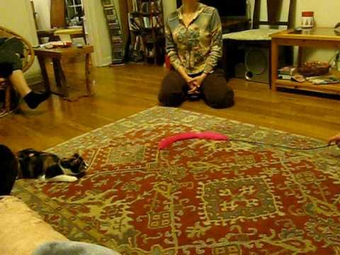 cat doing a backflip