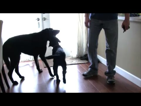 Stopping a puppy from harassing a 14 year old dog
