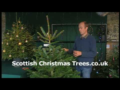 Maintaining Christmas Trees
