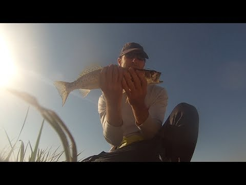 First Sea Trout