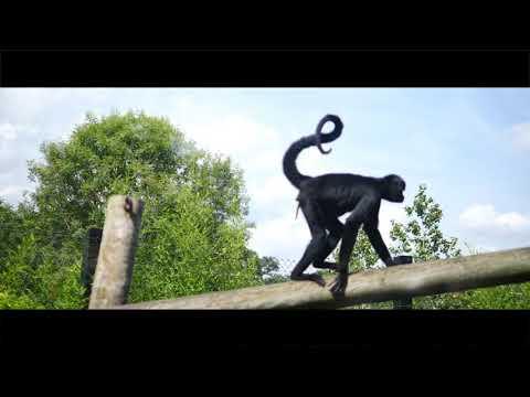 Roger Snipes - Visits Colchester Zoo