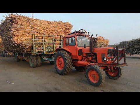 Belarus 510 Tractor in Action & Pulling Sugarcane Trolley