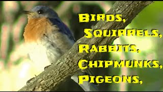 AWESOME Videos For Cats & Dogs To Watch Birds & Squirrels - The Ultimate Video for Your Cat