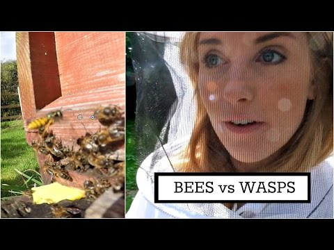 BEES vs WASPS | Beekeeping with Maddie #6