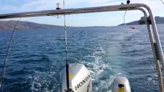 как ловить рыбу в эгейском море