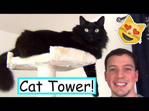 Building a New Cat Tower with my Kitty Helpers!