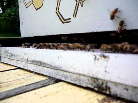 Bees on The Front Porch